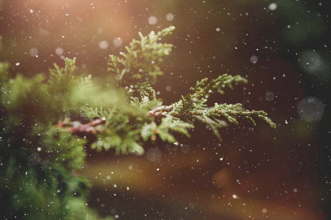 winter-1791370_1920 pixabay