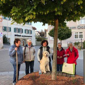 Landfrauen-Rose in Oberstenfeld gepflanzt